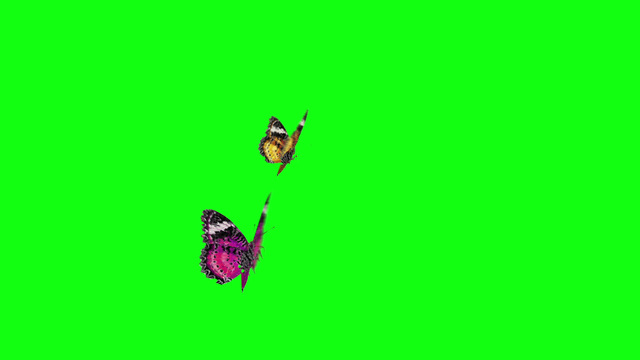 butterfly flying Stock Animations