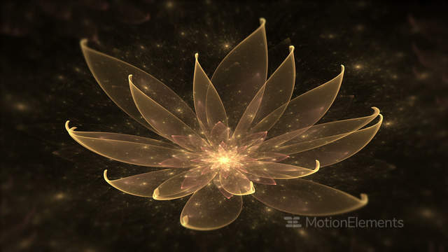 Golden Lotus Water Lily Enlightenment Or Meditation And Universe